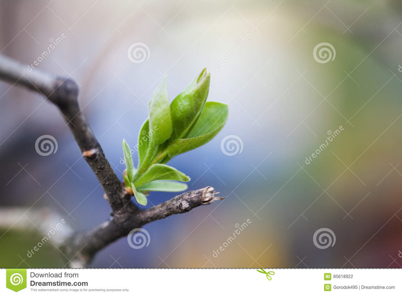 New life concept green leaf and broken tree branch. spring time nature concept. Soft focus, macro view