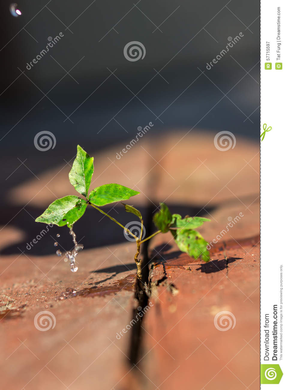 New life growing on a old wood floor stock photo image for Green floor plant