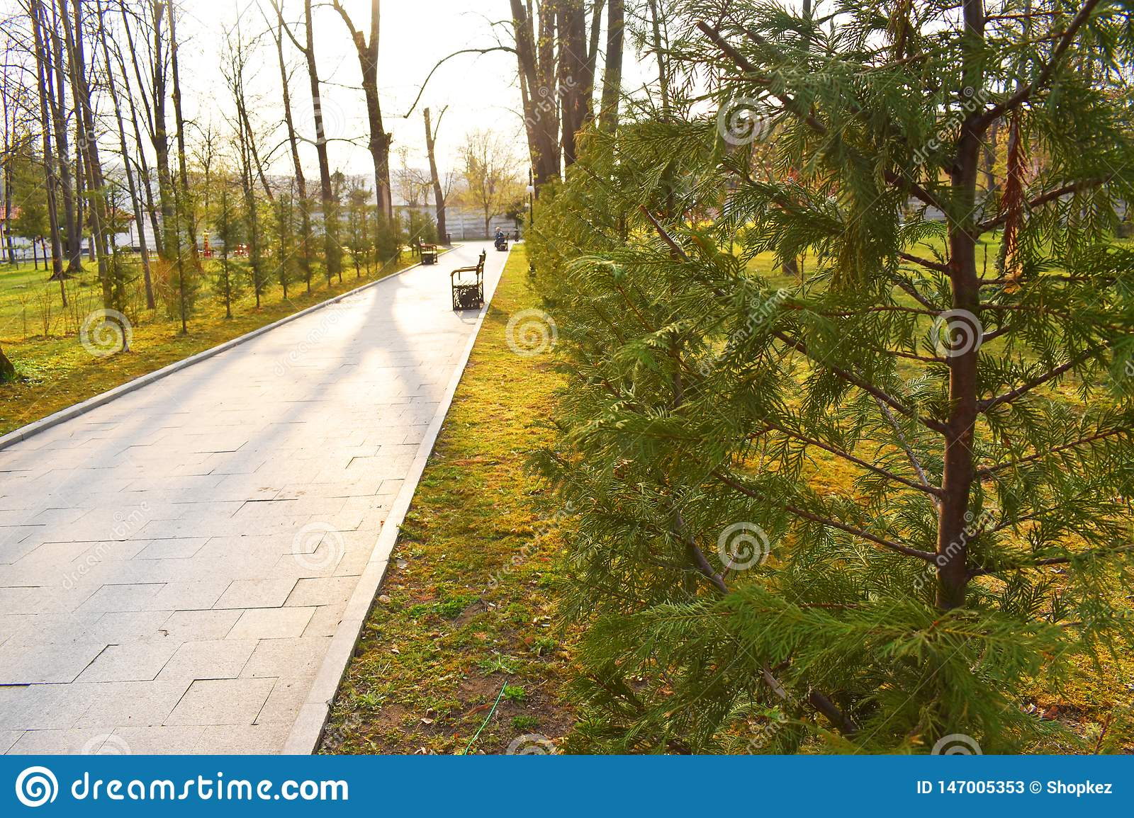 New pathway and beautiful trees track for running or walking and cycling relax in the park on green grass field in the city park