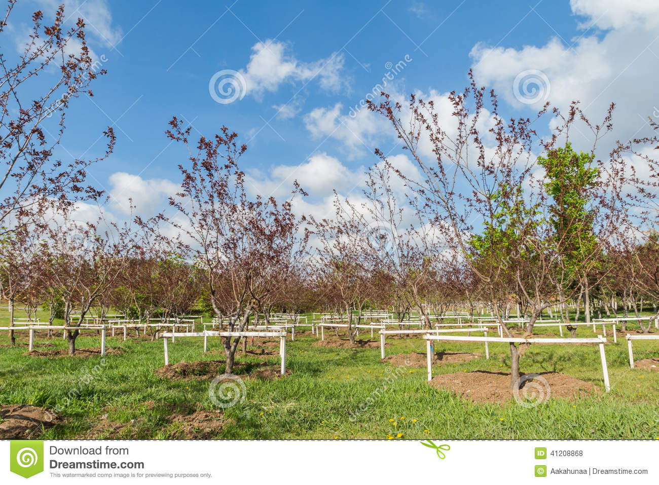 The New Plant Fruit Trees Stock Photo Image Of Agriculture 41208868