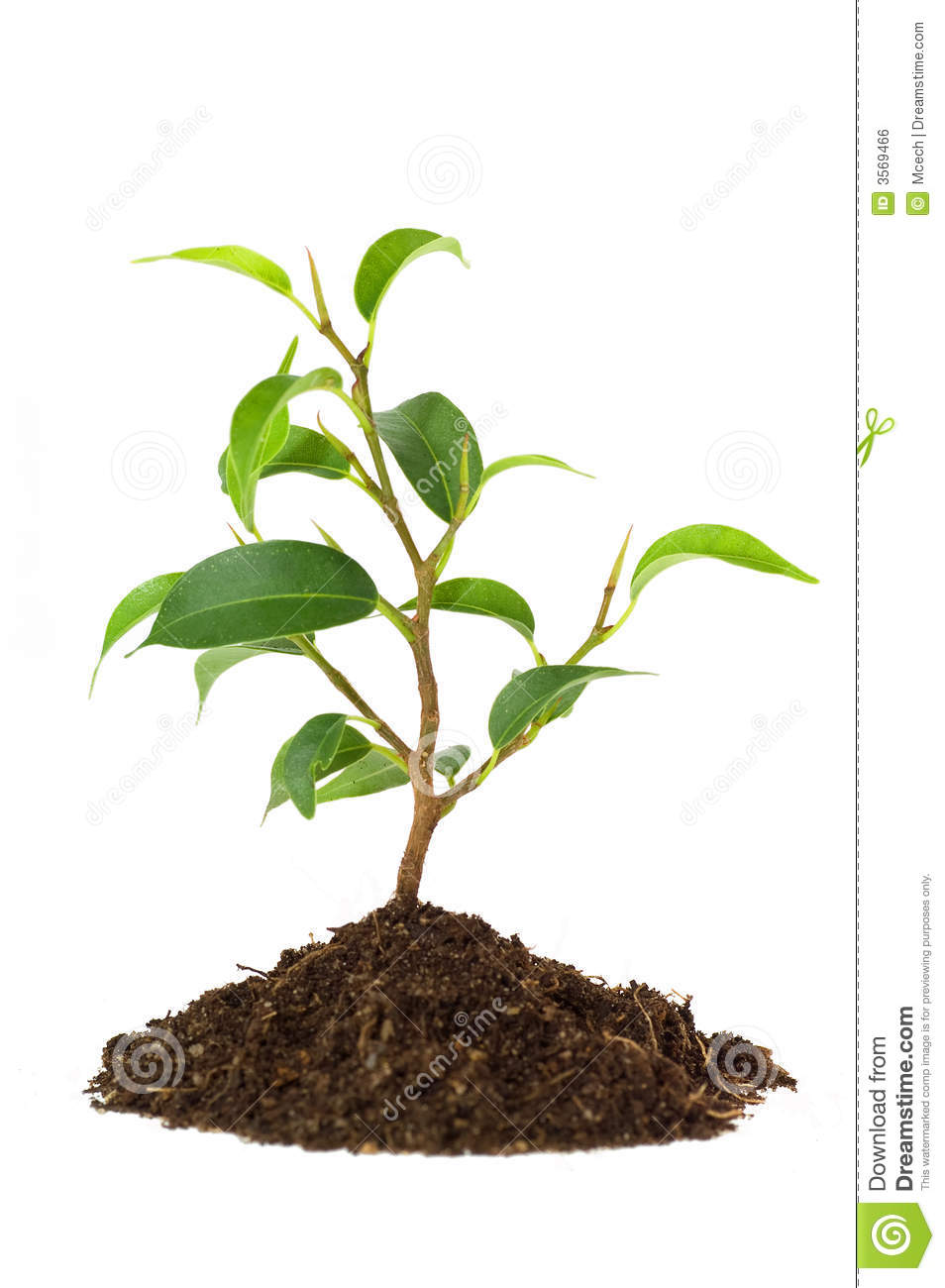 New Plant Life Royalty Free Stock Image - Image: 3569466