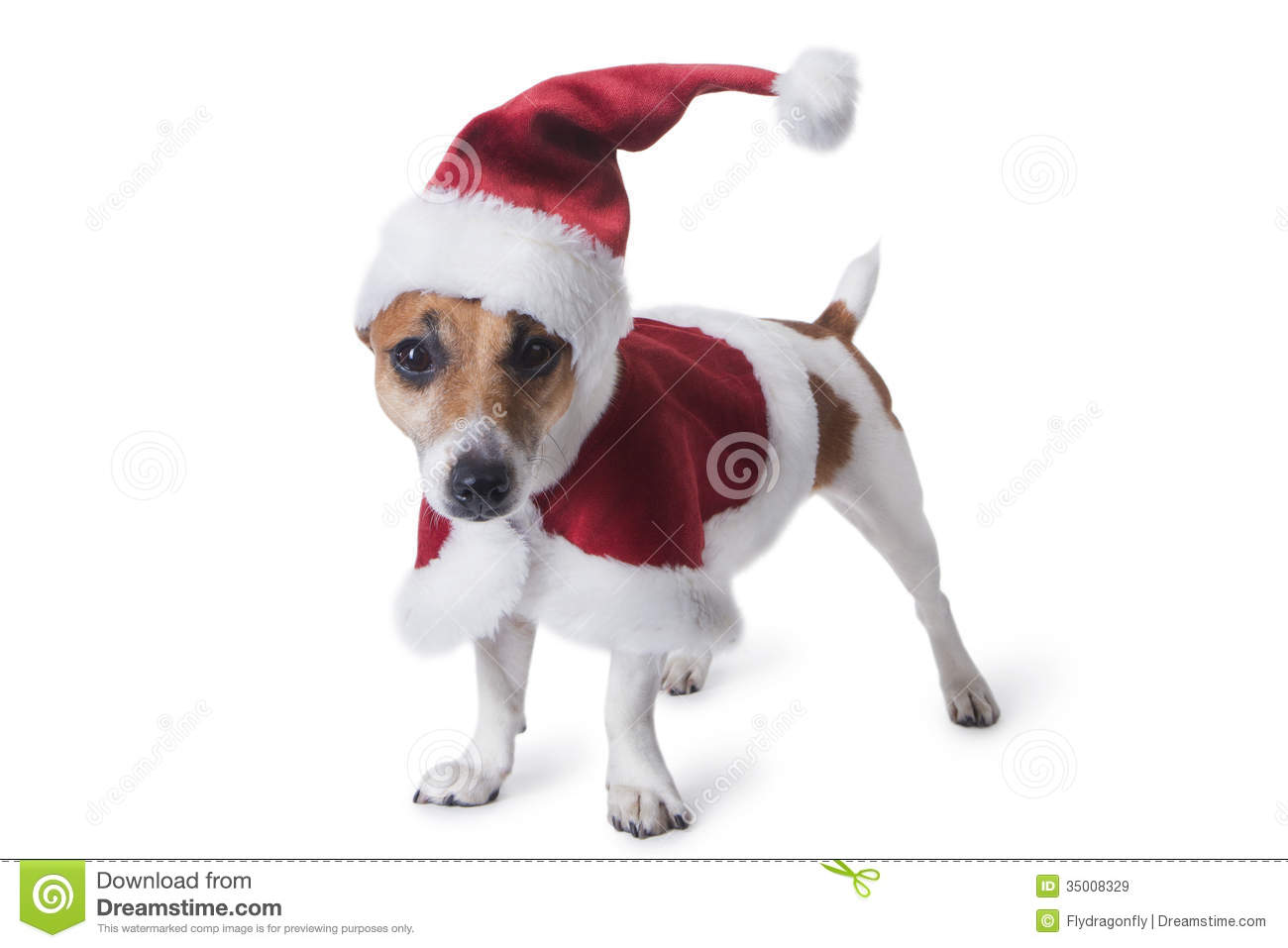 merry christmas puppy pictures