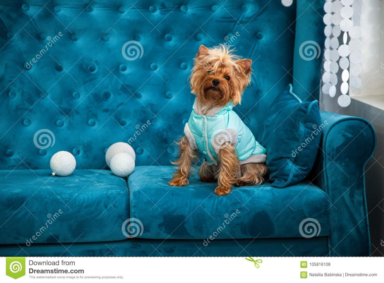 Astonishing Photo Session Couch Tiffany Blue Turquoise Color Dog Pet New Cjindustries Chair Design For Home Cjindustriesco