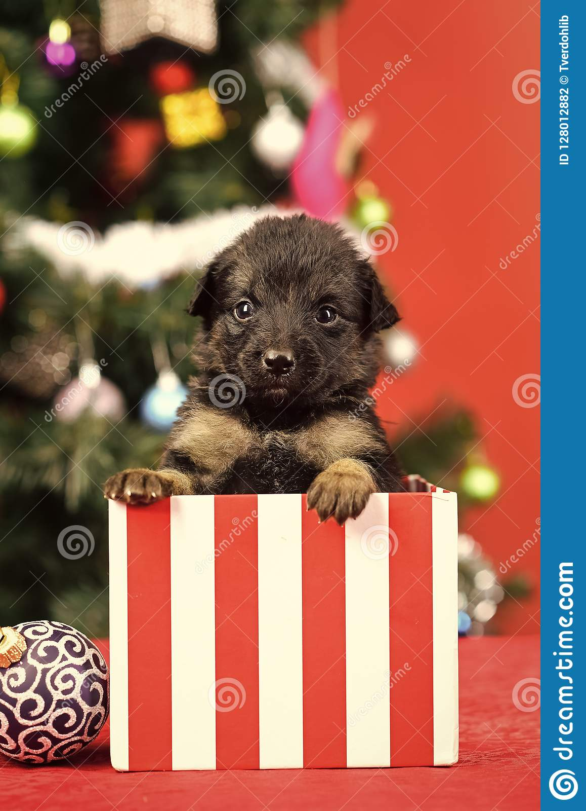 New Year Of Dog Puppy In Present Christmas Box Stock Photo Image Of Color Christmas 128012882