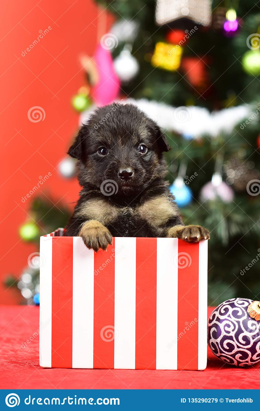 New Year Of Dog Puppy In Present Christmas Box Stock Image Image Of Cute Colorful 135290279