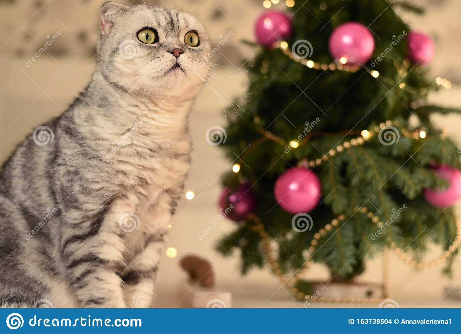 New Year`s Christmas scenery. The branches of a Christmas tree with toys and sparkling lights and a pet gray gray lop-eared cat. T
