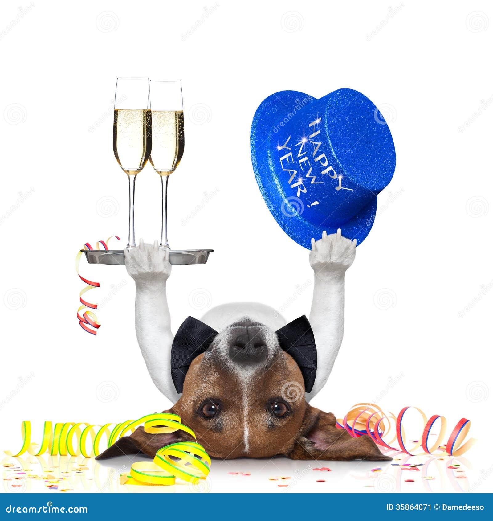 New Years Eve Dog Stock Image - Image: 35864071