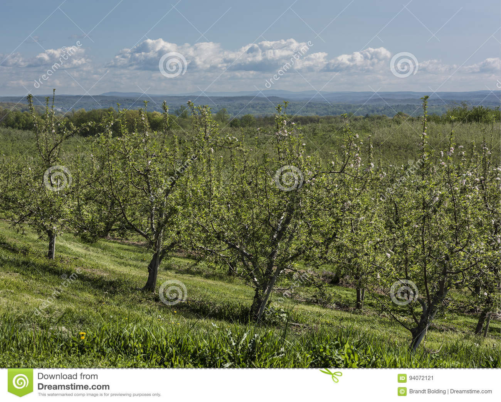 New York Apple fruktträdgård