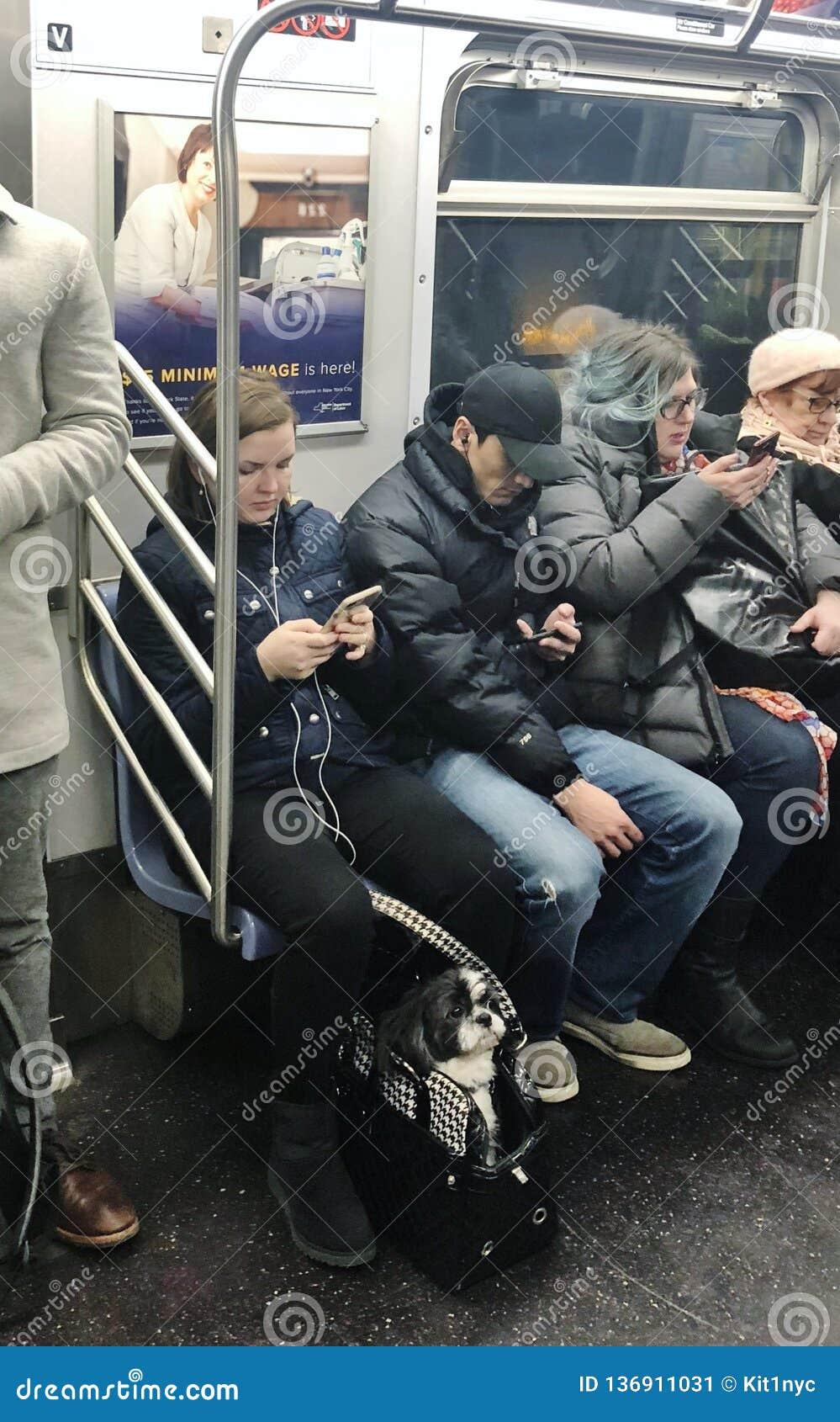 New York City People and Pet Animal Dog Riding Subway Car MTA Train NYC Urban Lifestyle