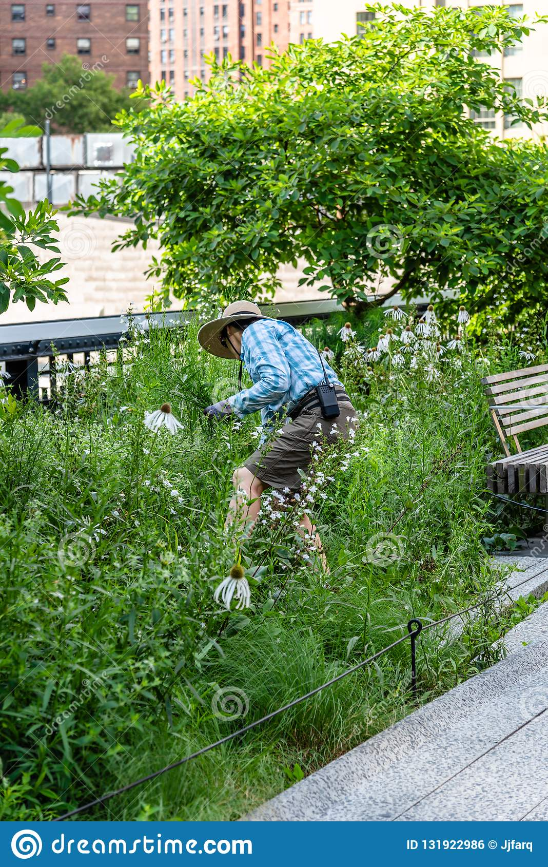 Volunteer Taking Care Of Garden In High Line On NYC