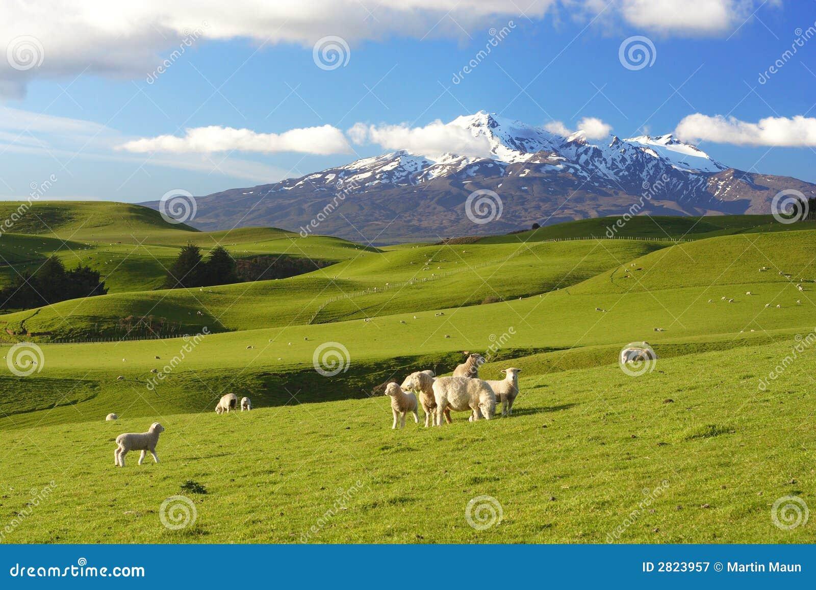 New Zealand Time Image: New Zealand Scenery Stock Image. Image Of Snowcapped