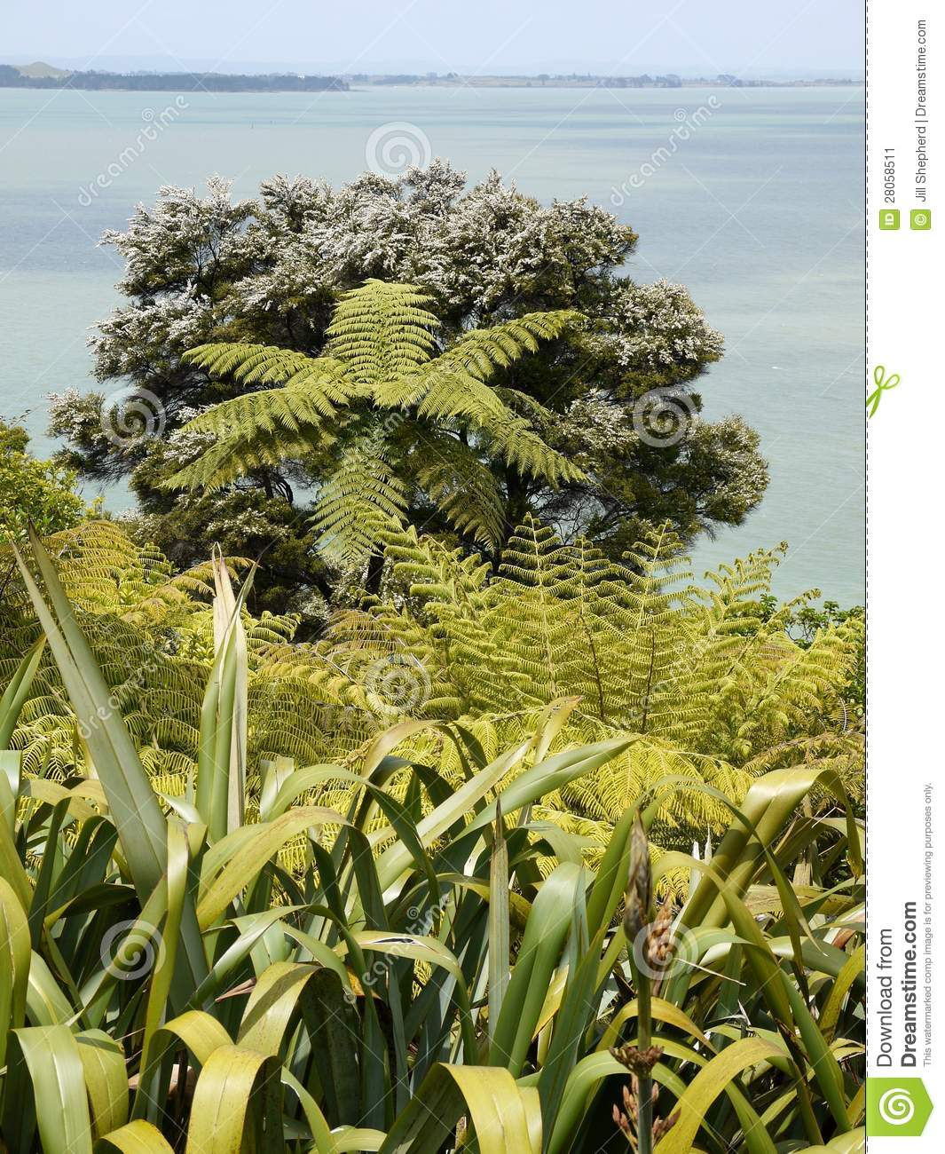 New zealand seaside garden native plants stock image for New garden plants
