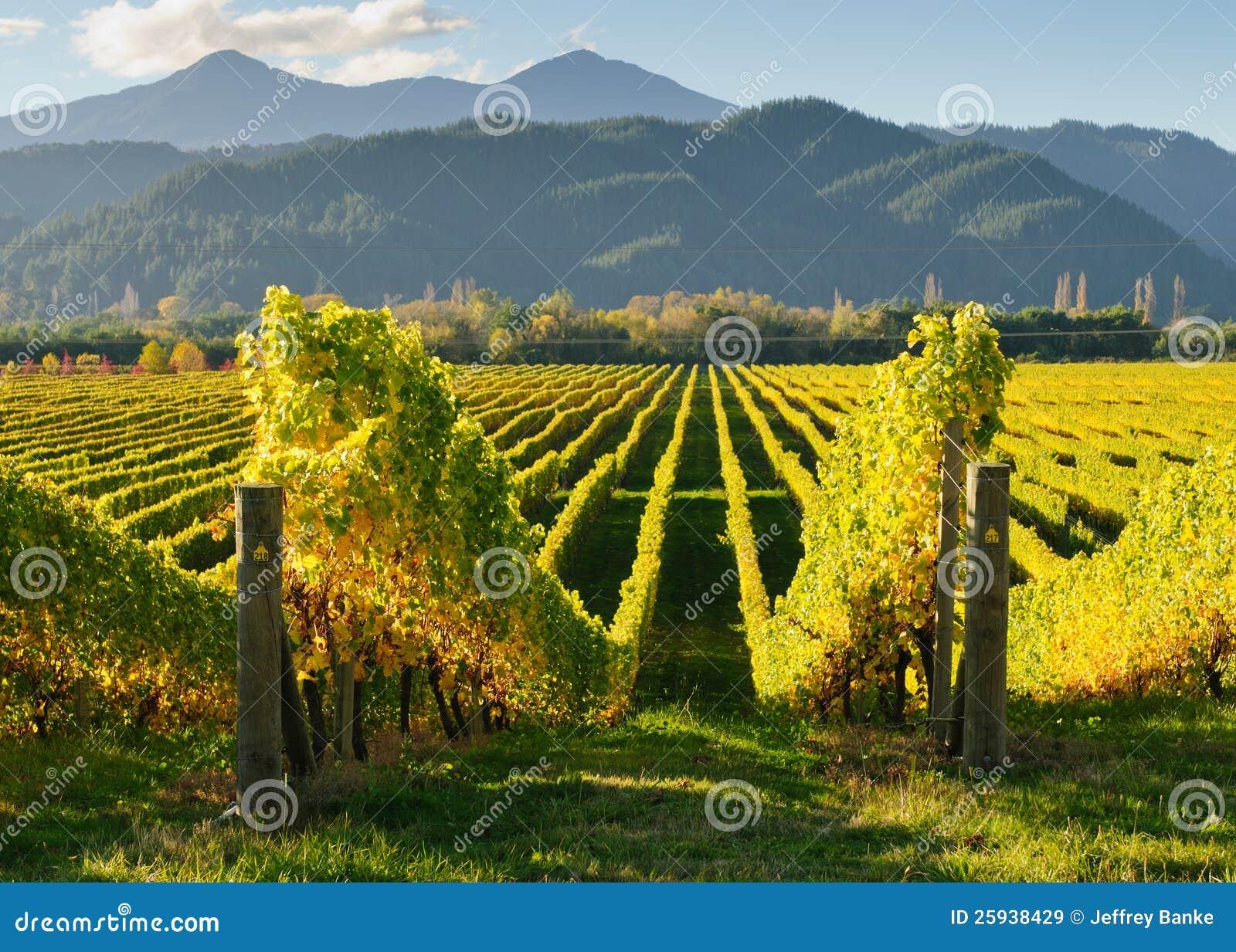 New Zealand vingård