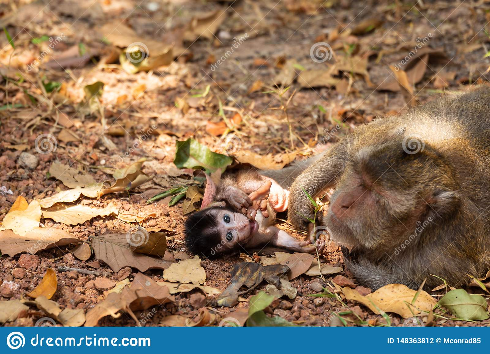 Newborn baby ape with crazy hairstyle