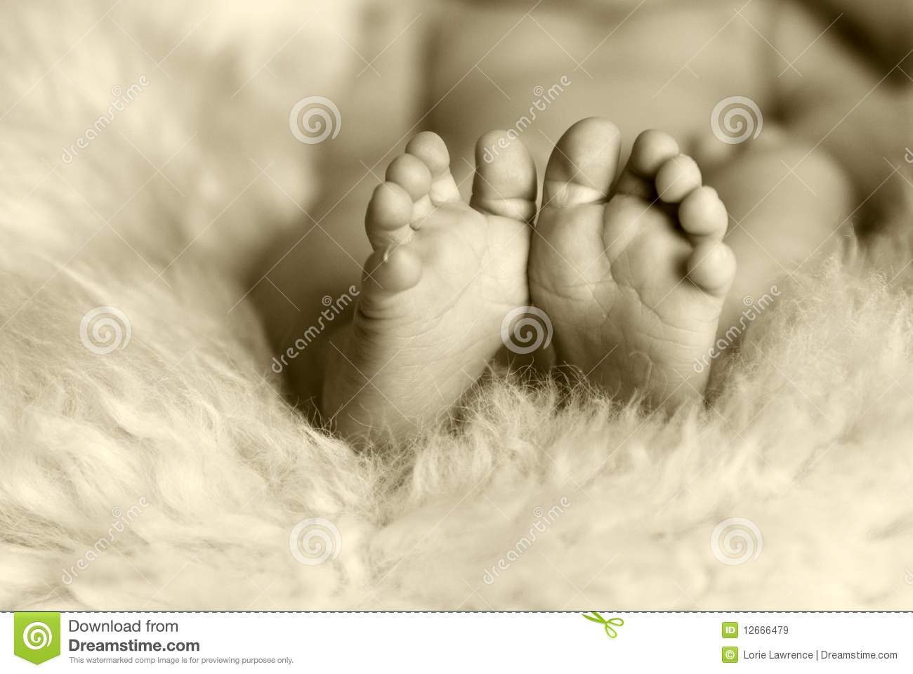 Newborn Baby Feet And Toes Stock Image Image Of Baby