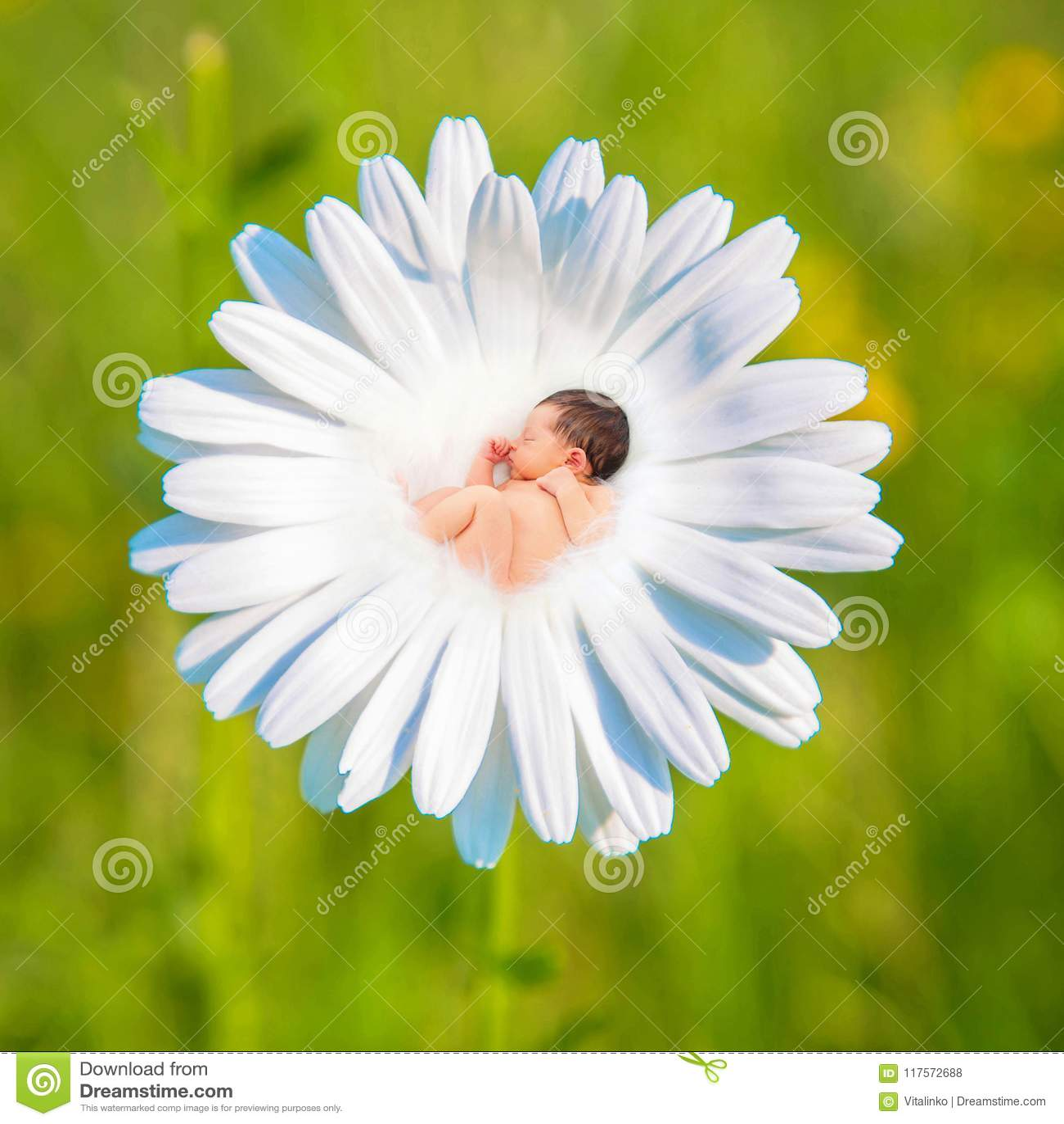 Newborn baby sleeps in white daisy flower stock photo image of download newborn baby sleeps in white daisy flower stock photo image of birth izmirmasajfo