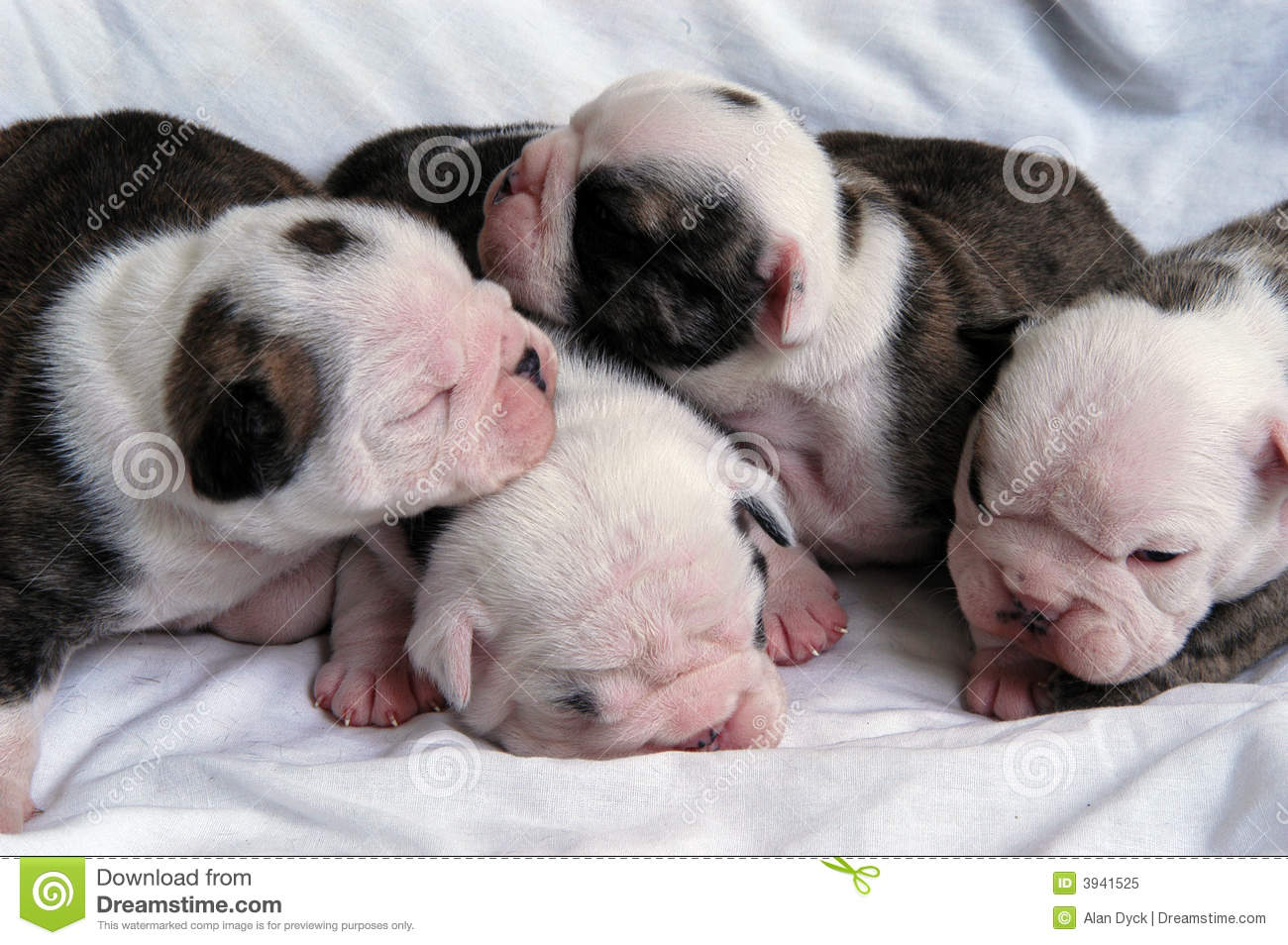 Baby K Dogs For Sale