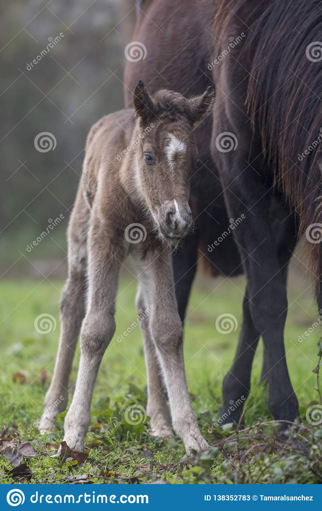 Newborn foal with its mother
