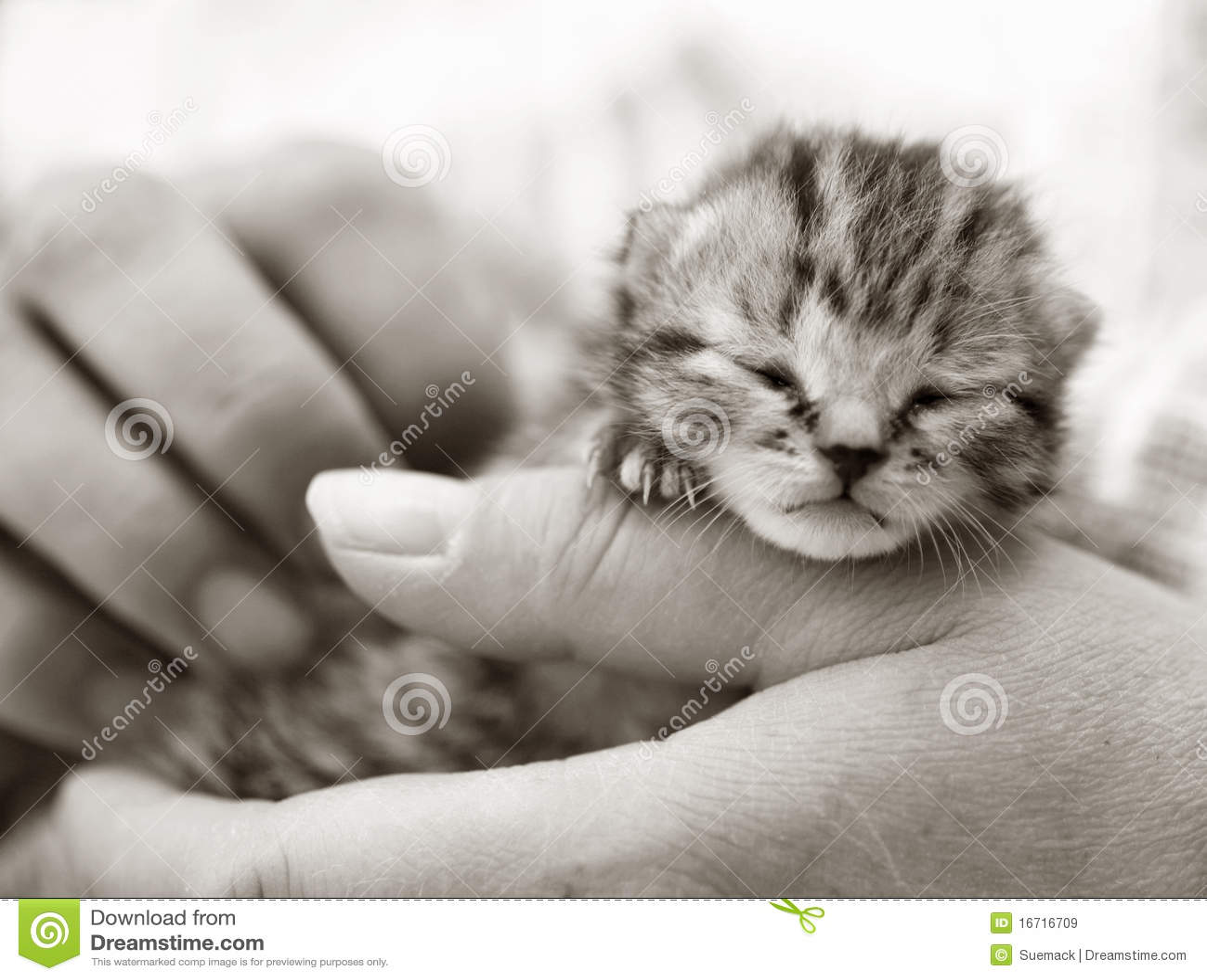 when to neuter a male kitten