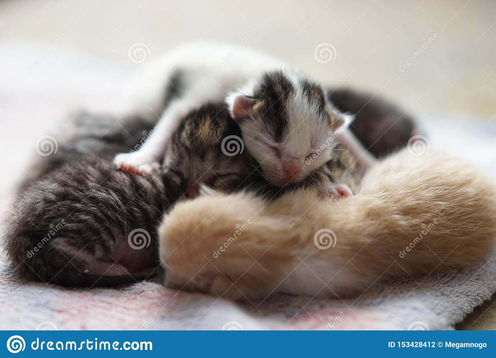 86 261 Cute Baby Animals Photos Free Royalty Free Stock Photos From Dreamstime