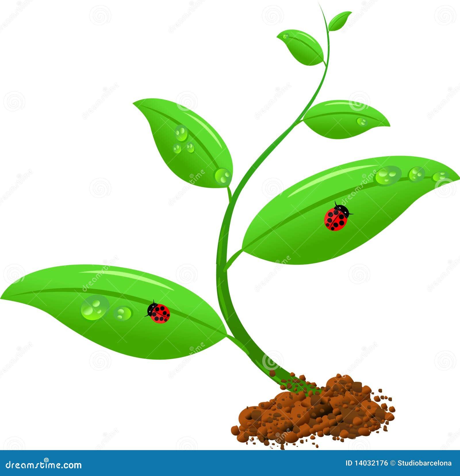 Newborn Plant Royalty Free Stock Image - Image: 14032176