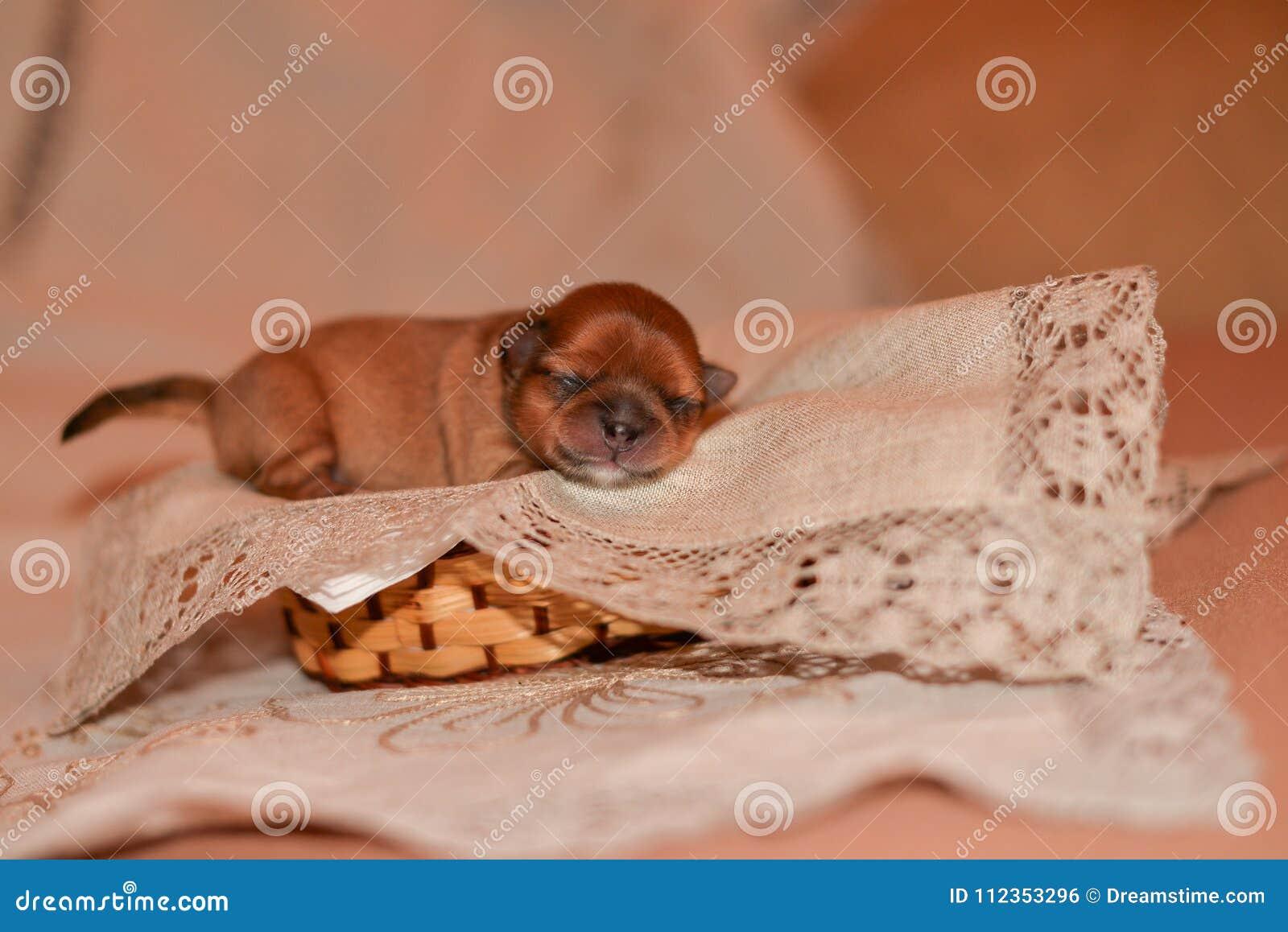 Newborn Puppy Stock Photo Image Of Happy Puppy Care 112353296