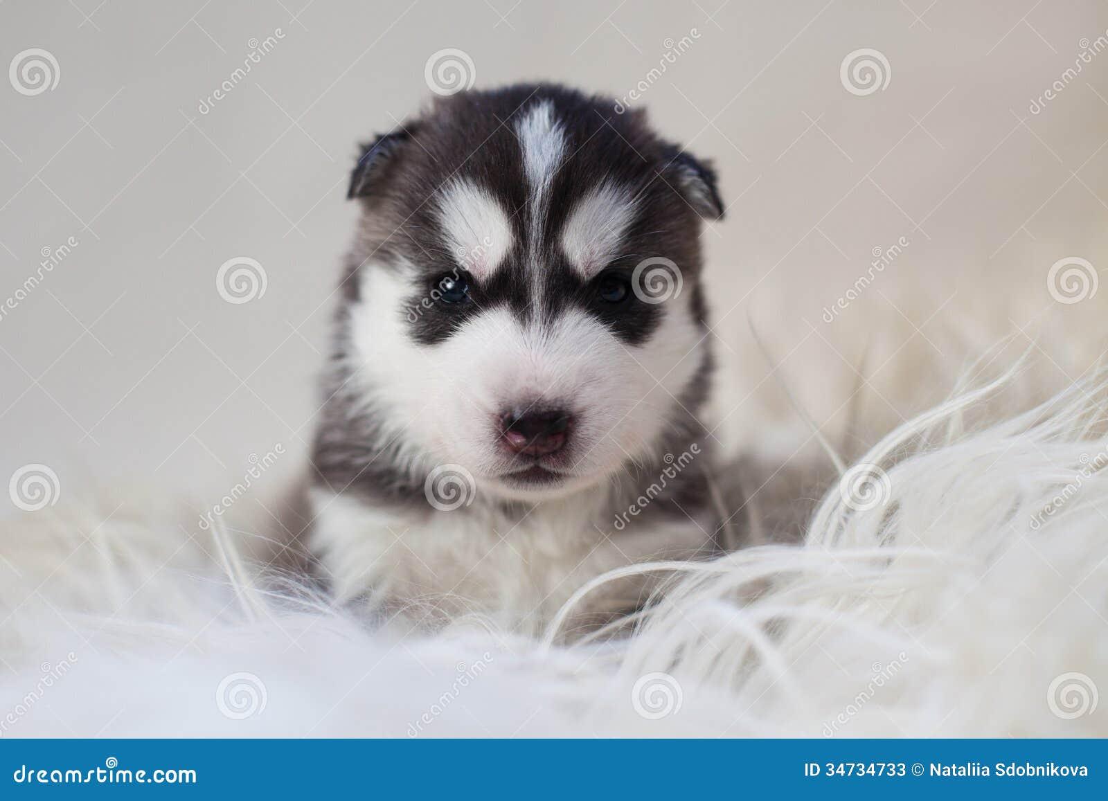 Newborn Puppy Stock Image Image Of Coat Doggy Playful