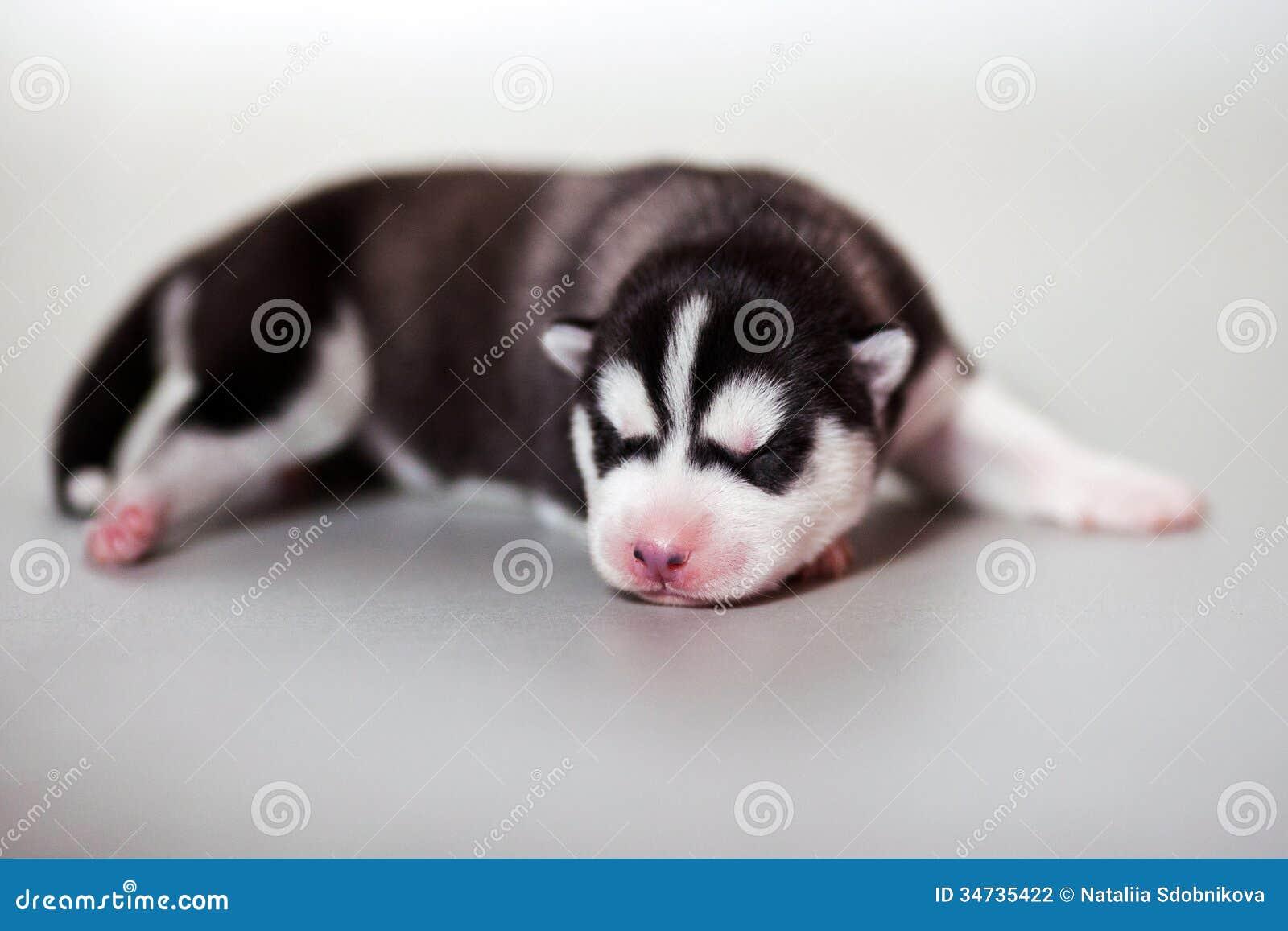 Newborn Puppy Stock Photo Image Of Animal Puppy Cute