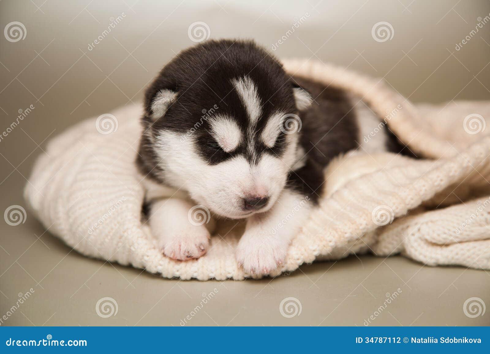 Newborn Puppy Stock Photo Image Of Adorable Pedigree