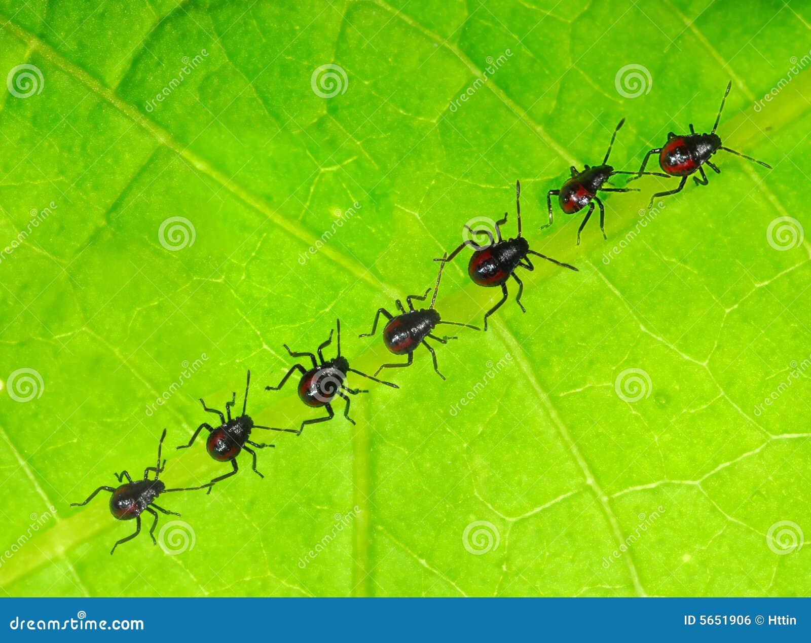 Newly born bugs