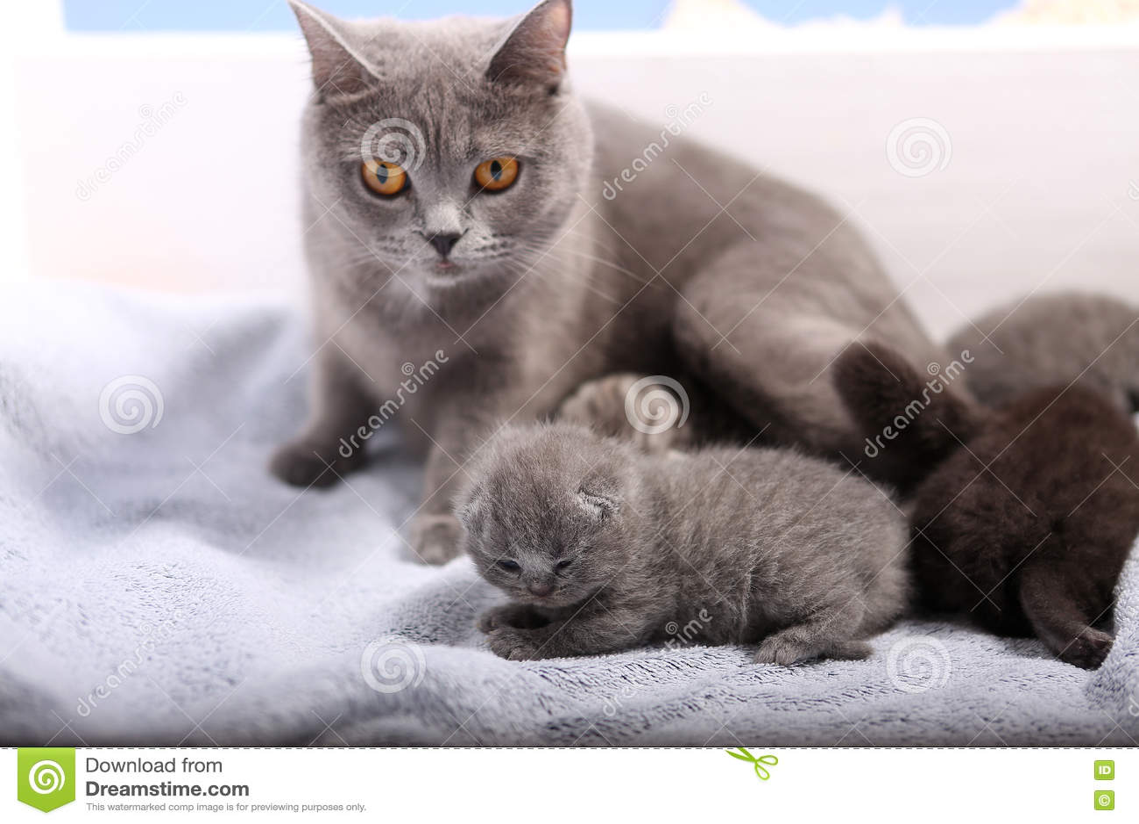 Newly born kittens