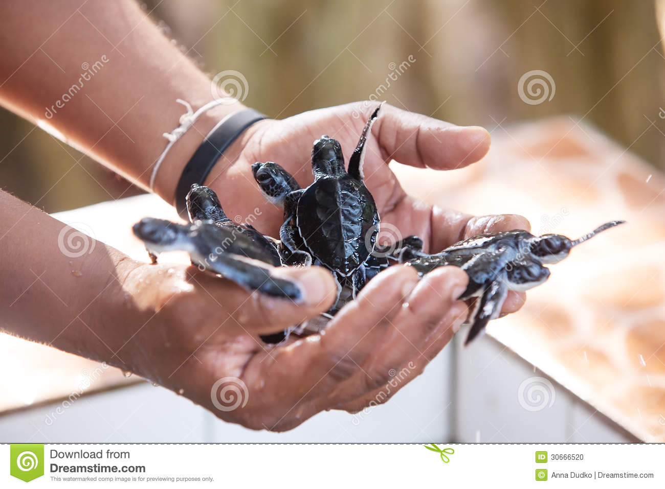 Download Newly Hatched Babies Turtle Stock Photo - Image of macro, baby: 30666520