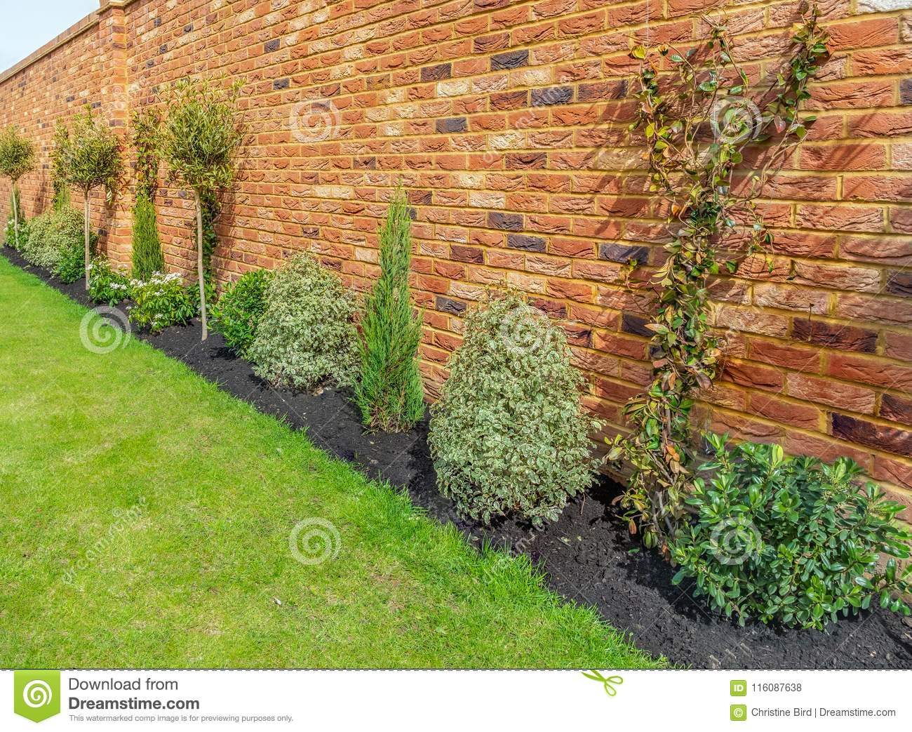Newly Planted Shrubs And Plants Against A Red Brick Wall Stock