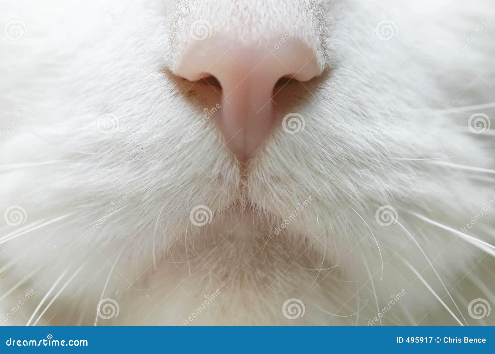 """Résultat de recherche d'images pour """"nez de chat"""""""