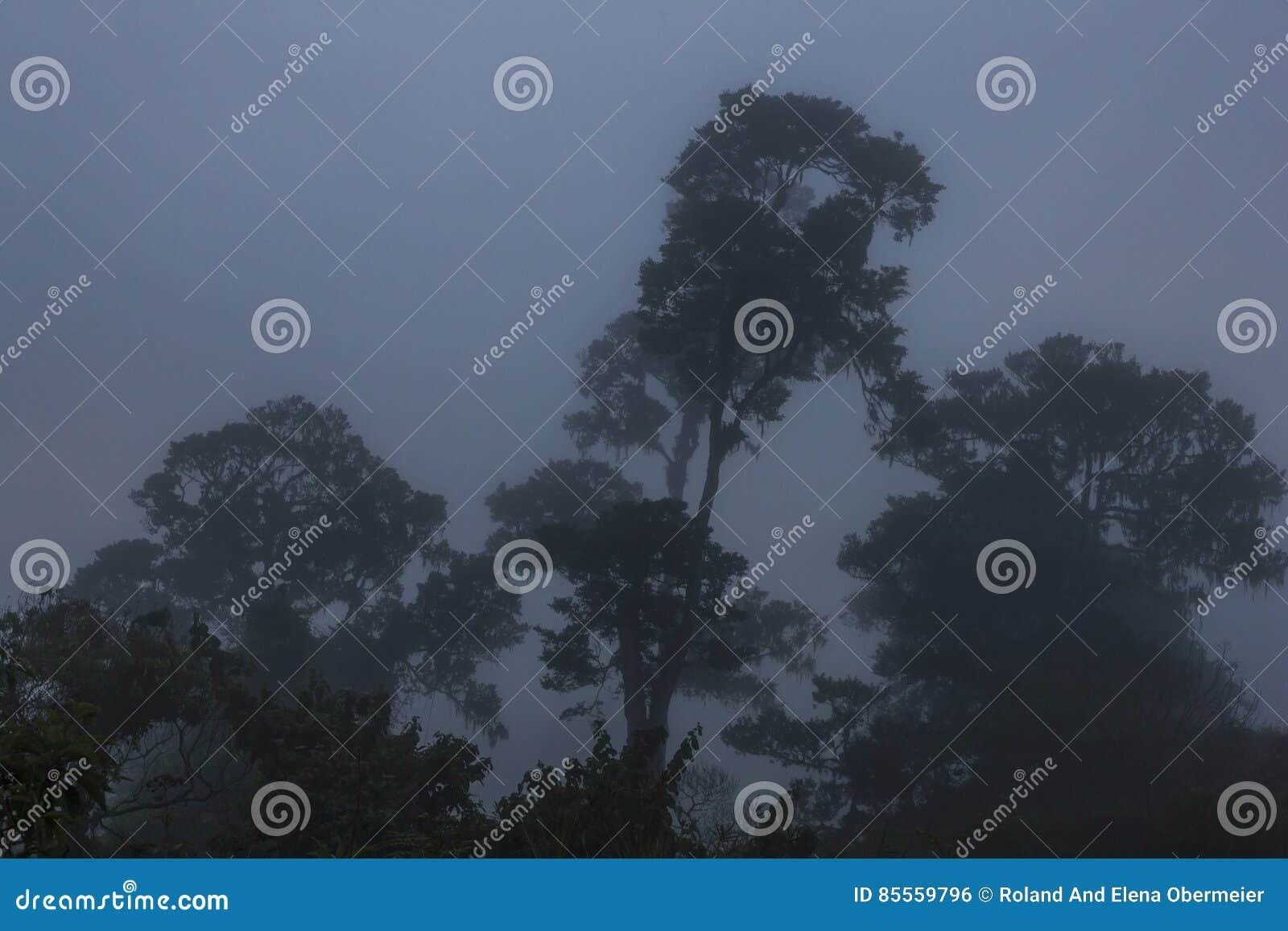 Ngorongoro-Krater-Nebel-Landschaft