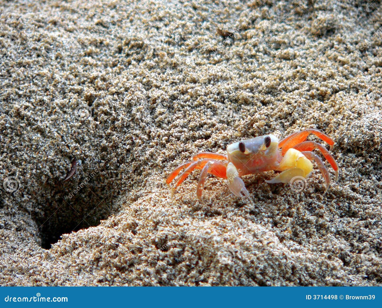 Ngpali Beach Crab