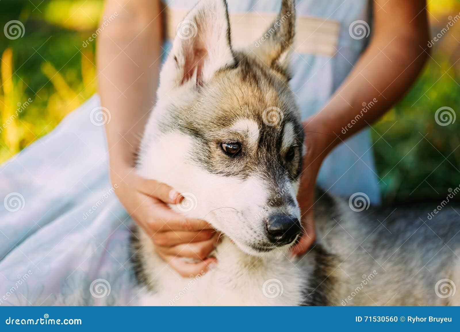 Niña y su perro de perrito Husky In Park In Summer