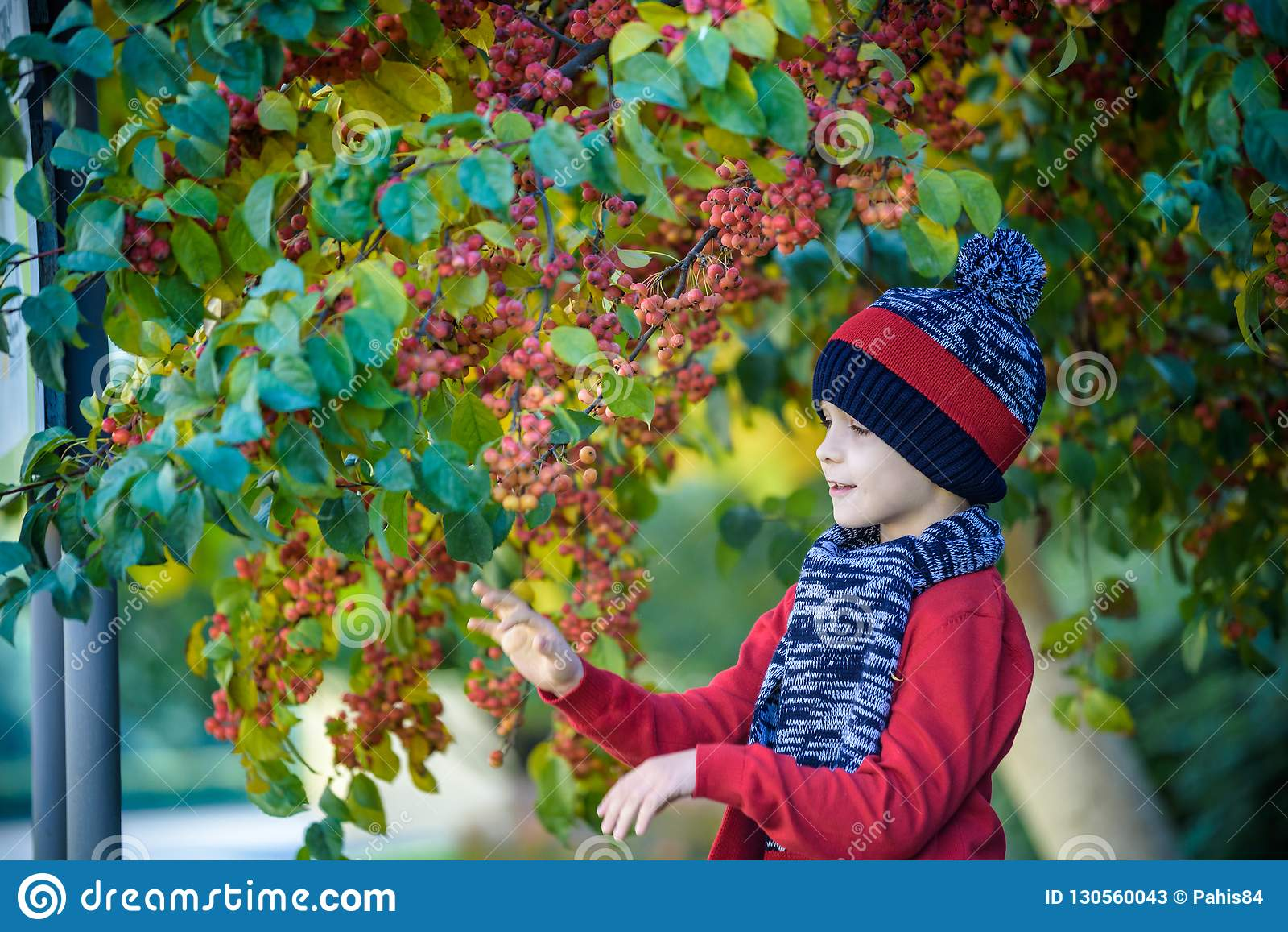 Niño en una granja en otoño Niño pequeño que juega en huerta decorativa del manzano Fruta de la selección del niño Niño que come