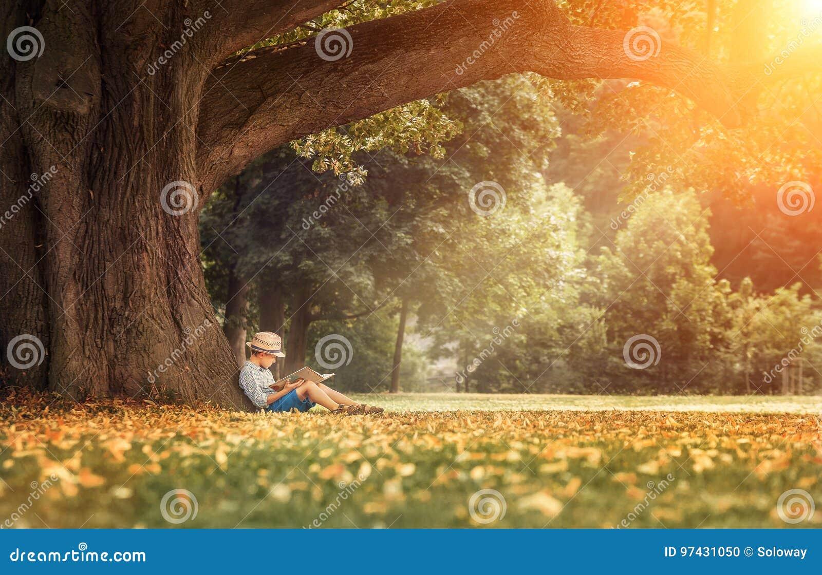 Niño pequeño que lee un libro debajo de árbol de tilo grande