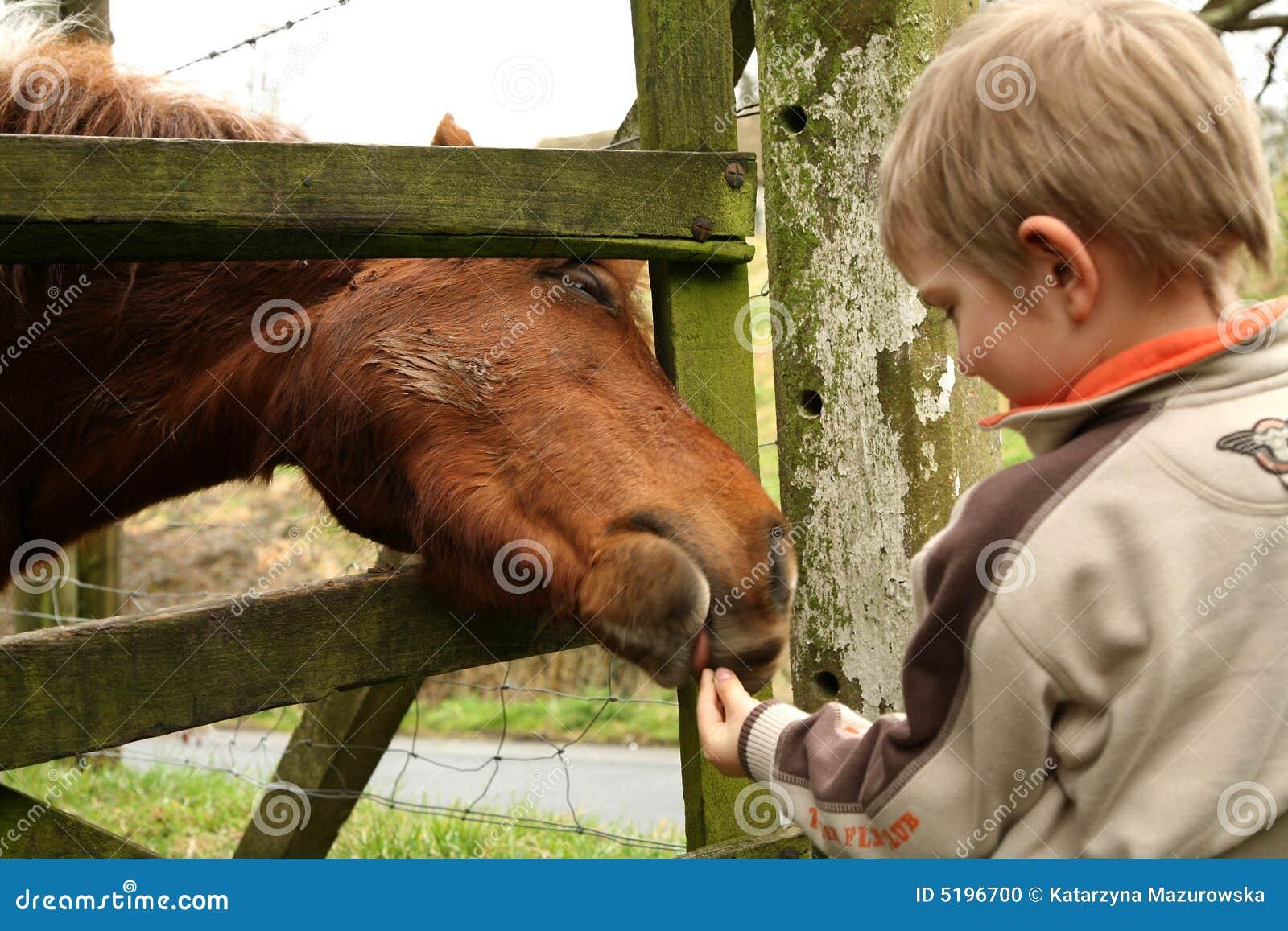 Niño pequeño y caballo