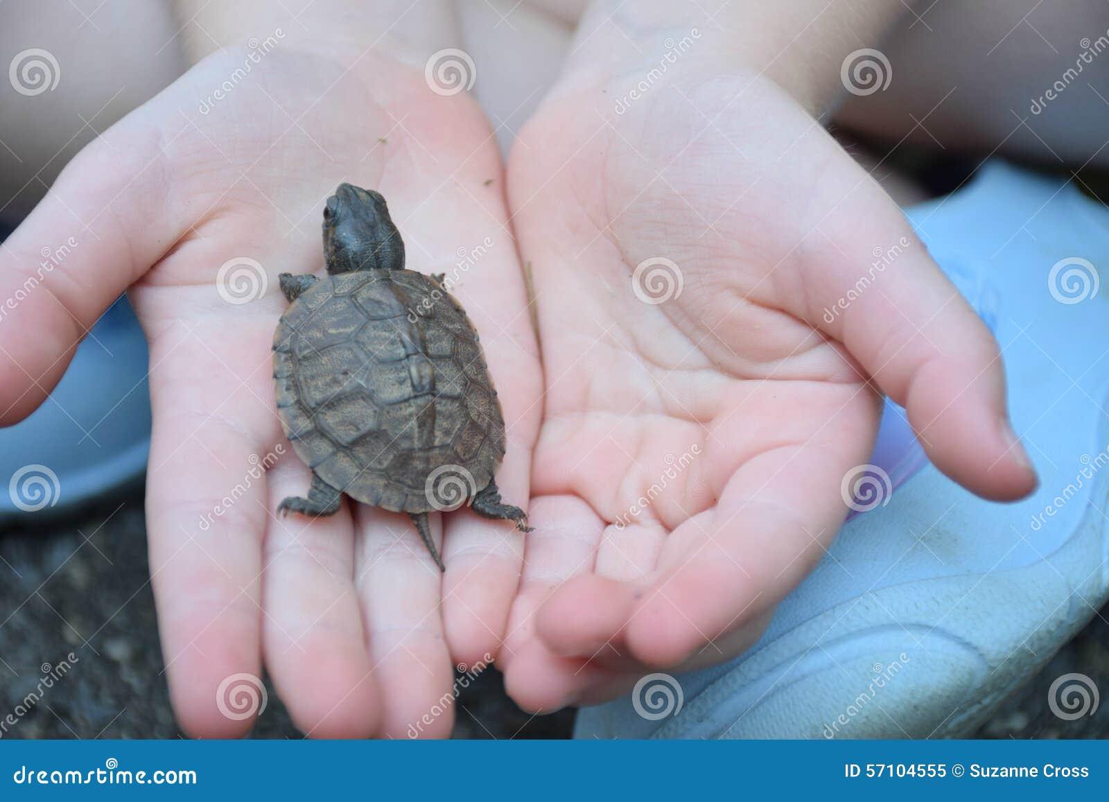 Niño que sostiene la tortuga del bebé