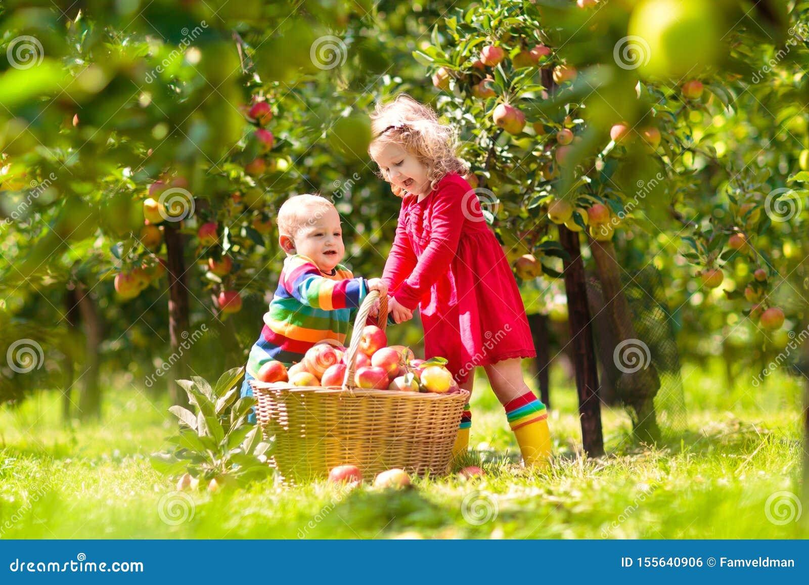 Niños que escogen manzanas en granja en otoño