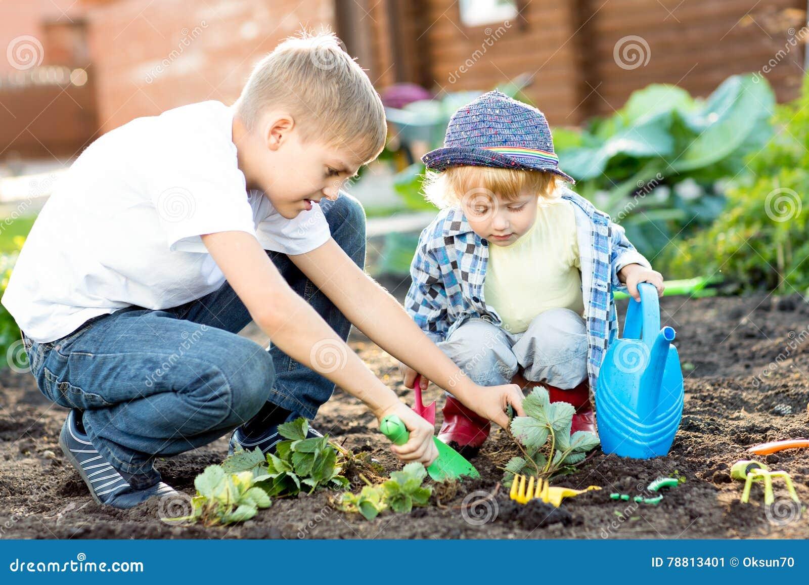 Niños que plantan el almácigo de la fresa en suelo fértil afuera en jardín
