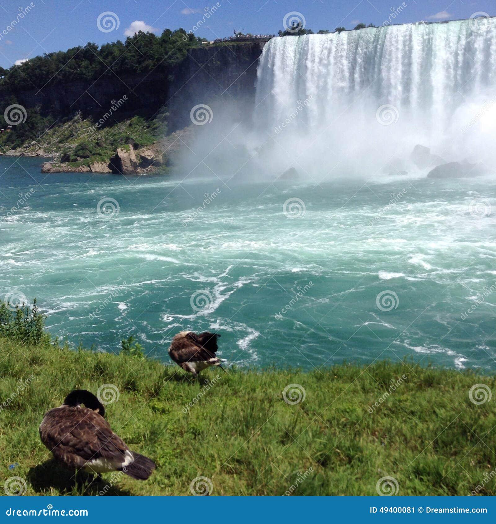 Download Niagara- Fallsgänse stockbild. Bild von grün, schön, amerika - 49400081