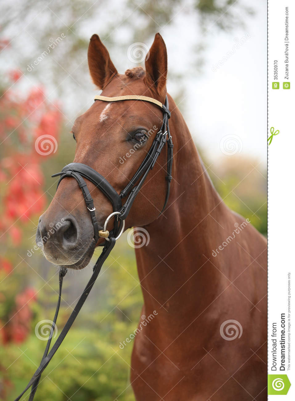 Nice Big Horse With Perfect Hair Style Stock Photo Image