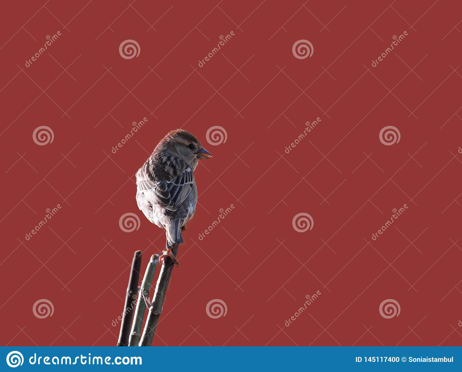 Nice Birdie