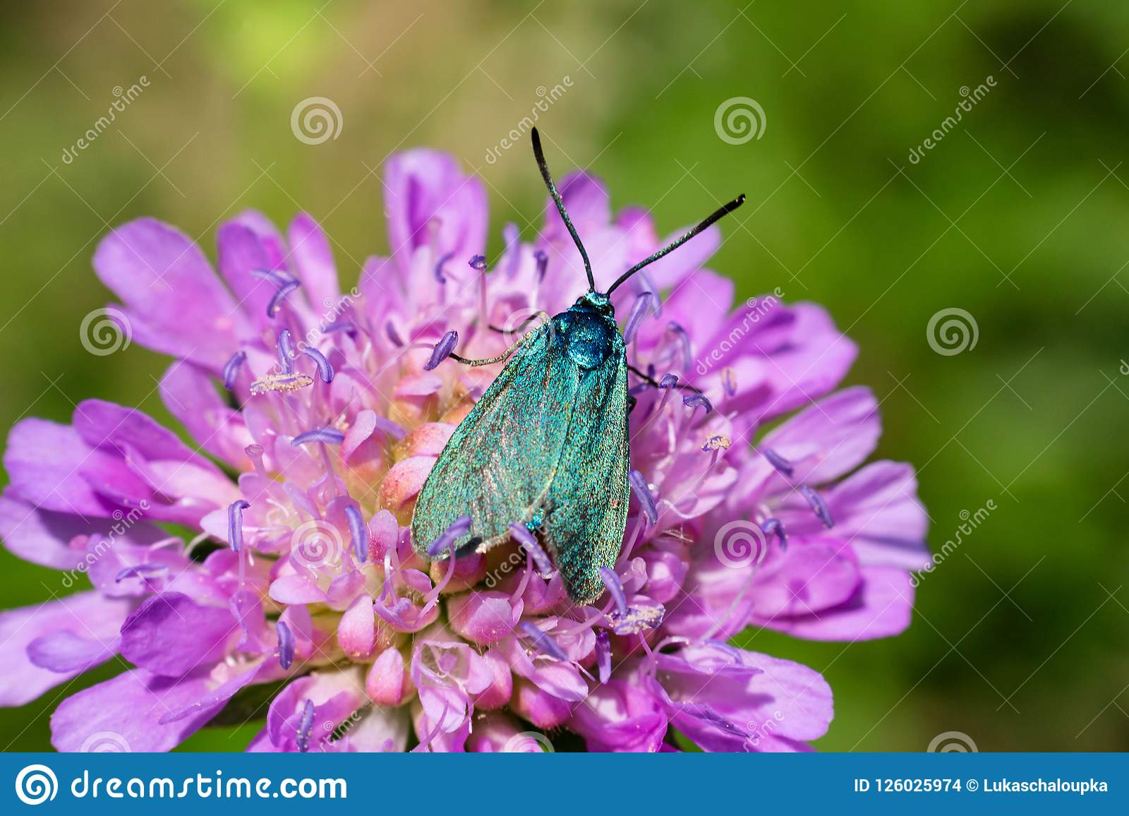 Nice blue butterfly on flower blossom, macro photo