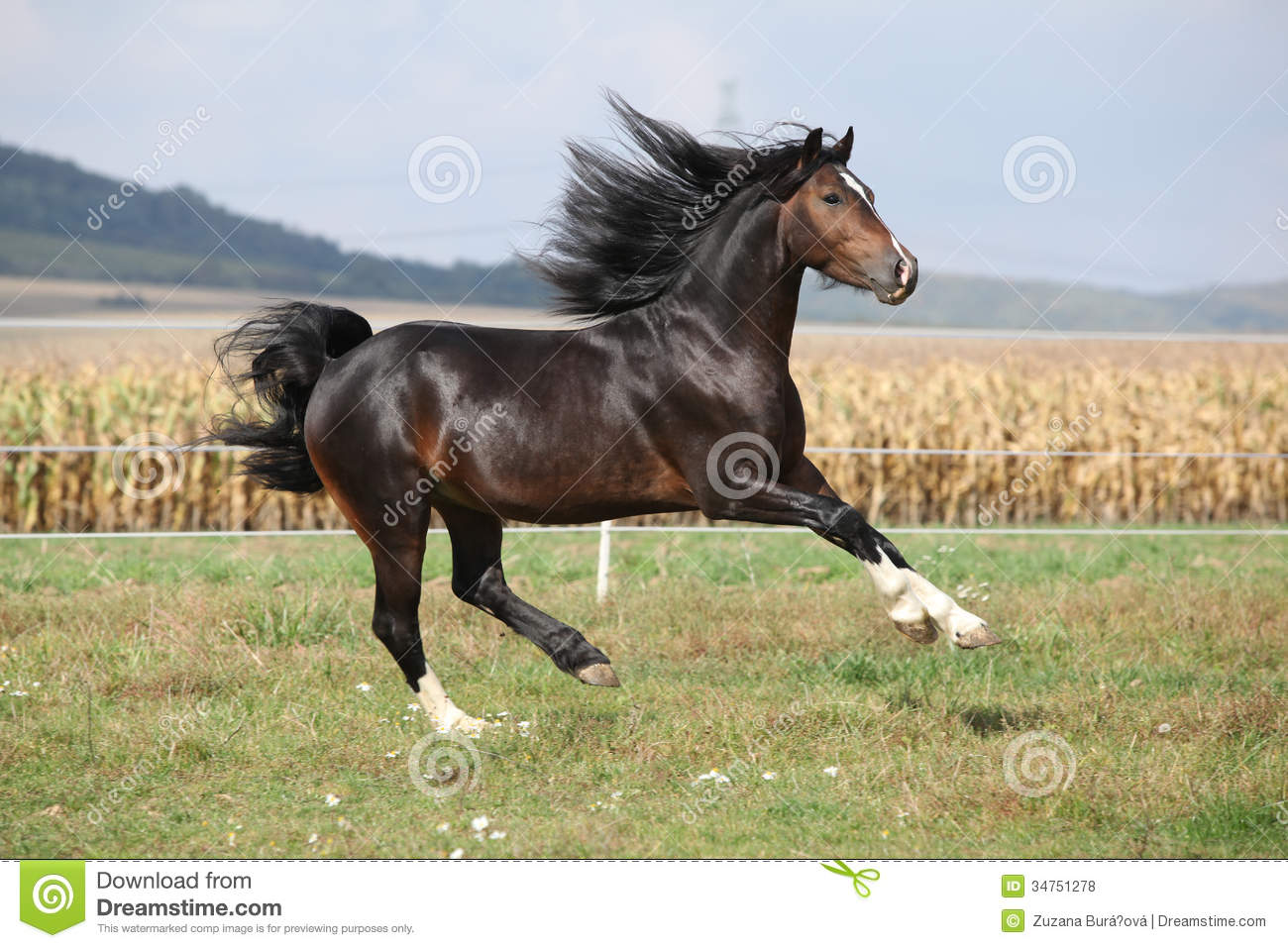 long manes stock photos - photo #8