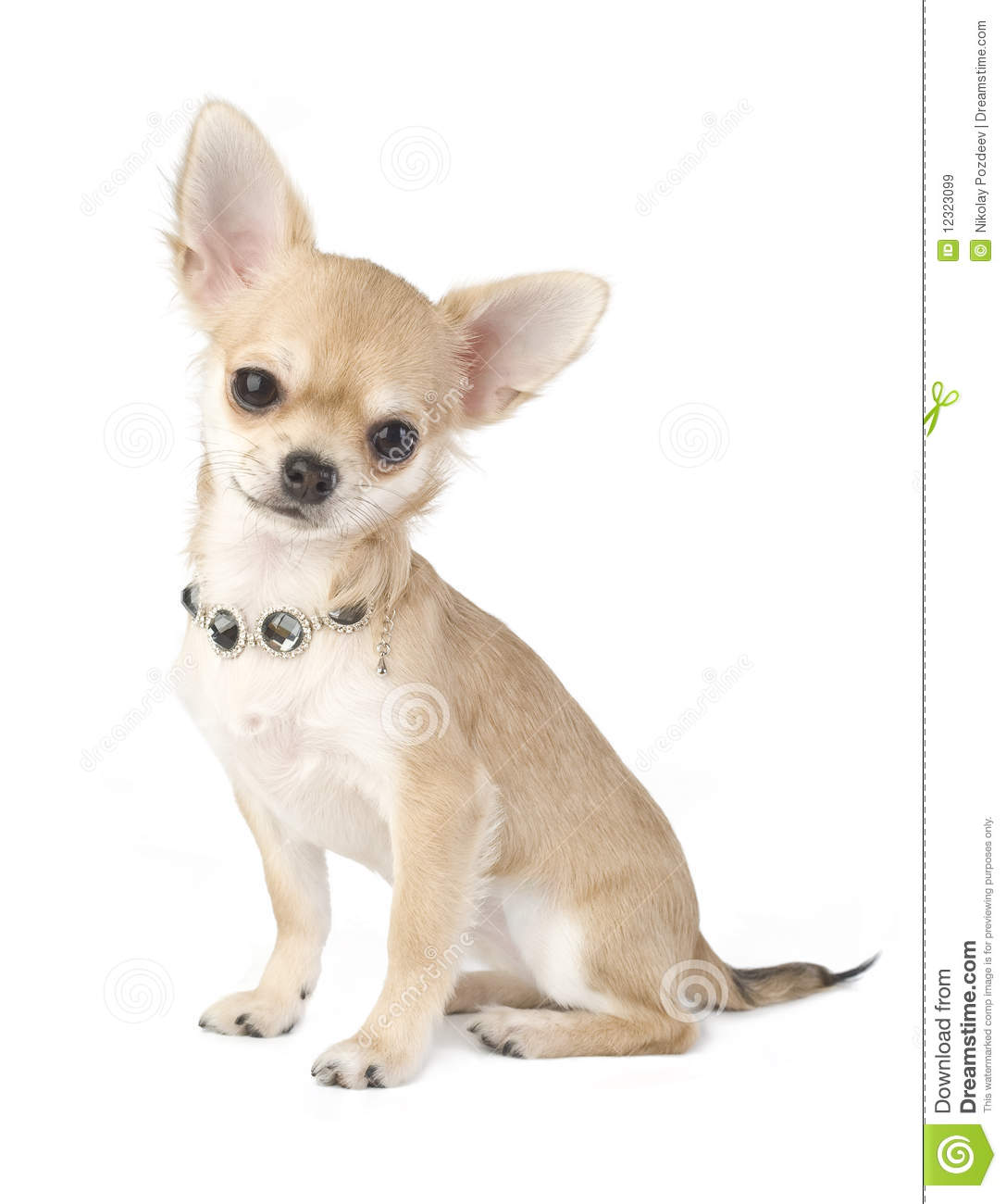 chihuahua dog clipart - photo #46
