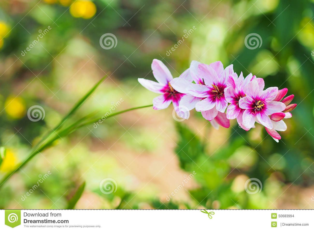 nice flower closeup in the garden during day time stock photo, Beautiful flower